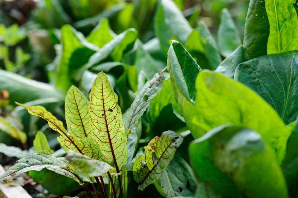 A 8 legjobb árnyéktűrő fűszernövény