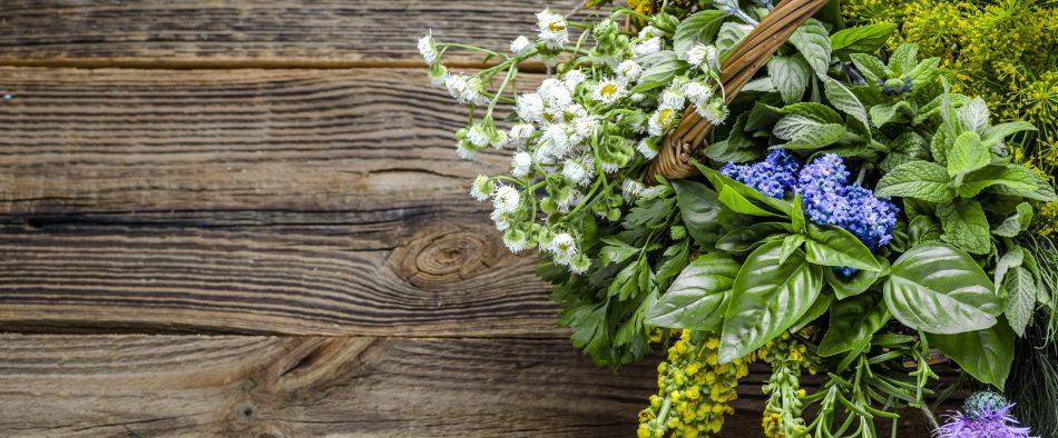 friss fűszernövények