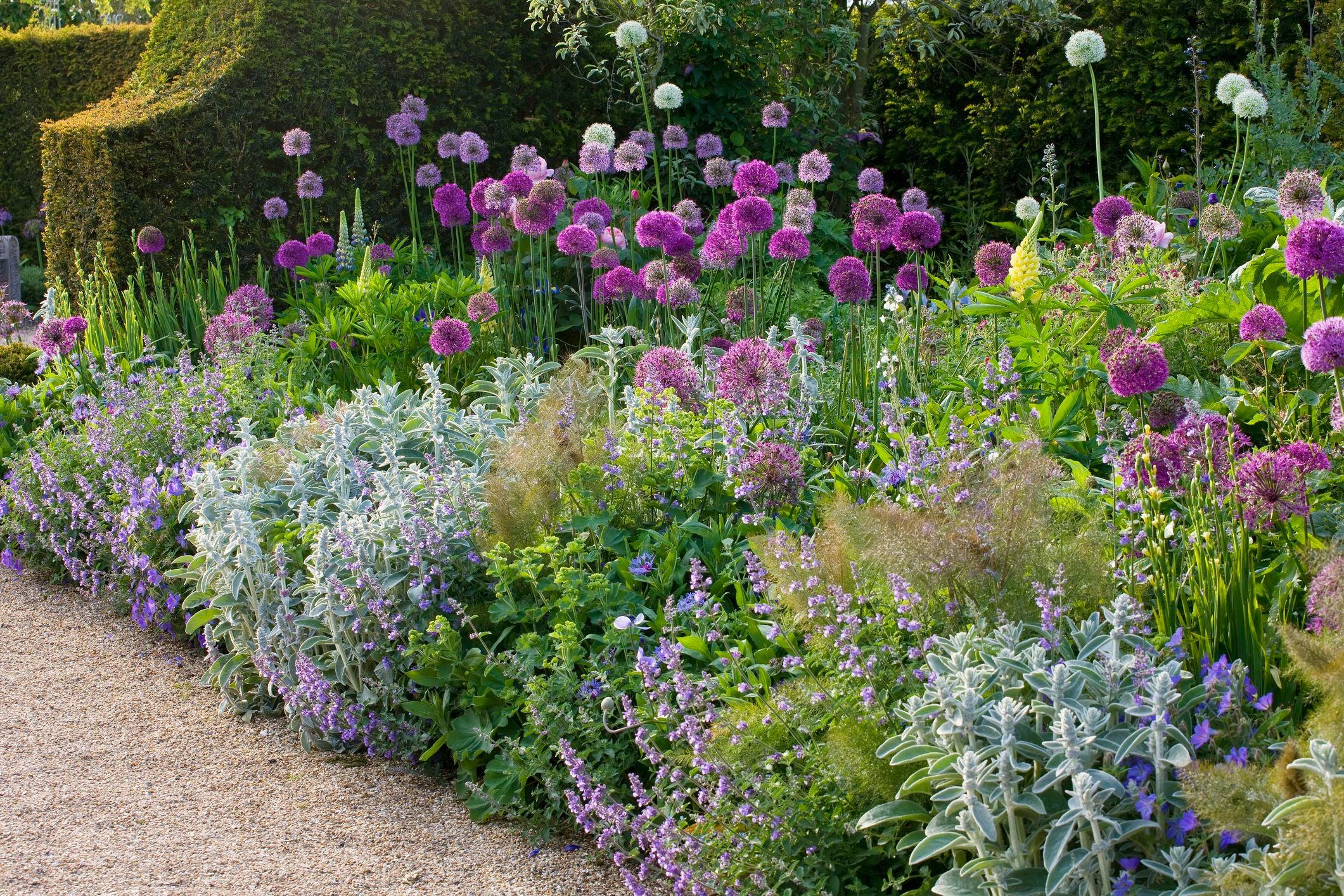Formabontó dizájn a kertben - a díszhagymák