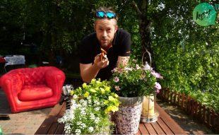 egynyári virág visszavágása