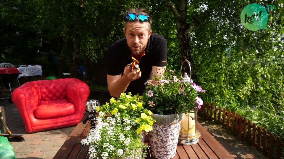 Mitől marad szép az egynyári virág? - videó