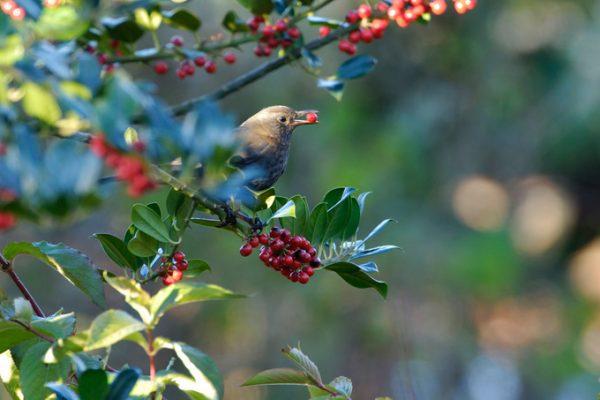 hasznos madarak a kertben