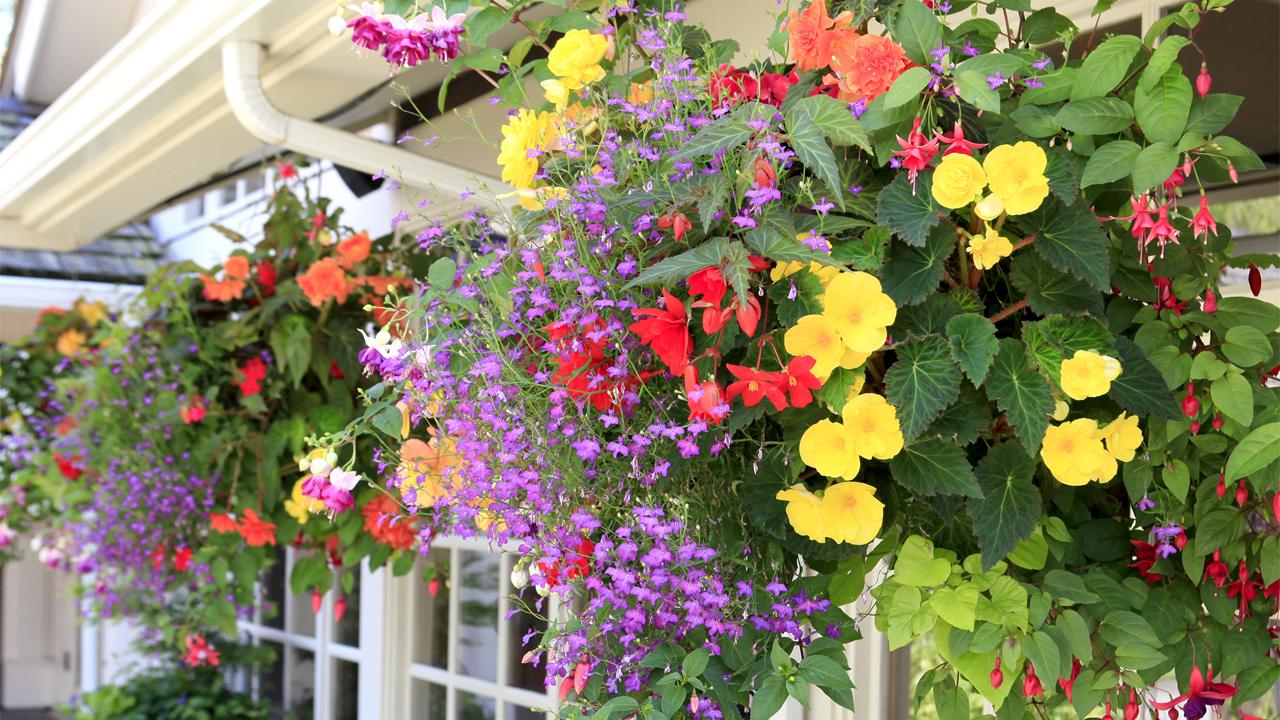 Így készíts különleges nyári virágládát - tippek, trükkök a tartós virágpompáért