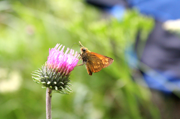 hasznos rovarok a kertben