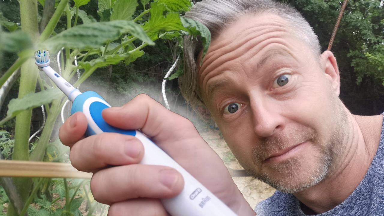 Egy zseniális trükk a paradicsom beporzásához - de mit keres egy fogkefe a konyhakertben? - videó