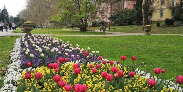 tulipán szőnyegágy Hévízen