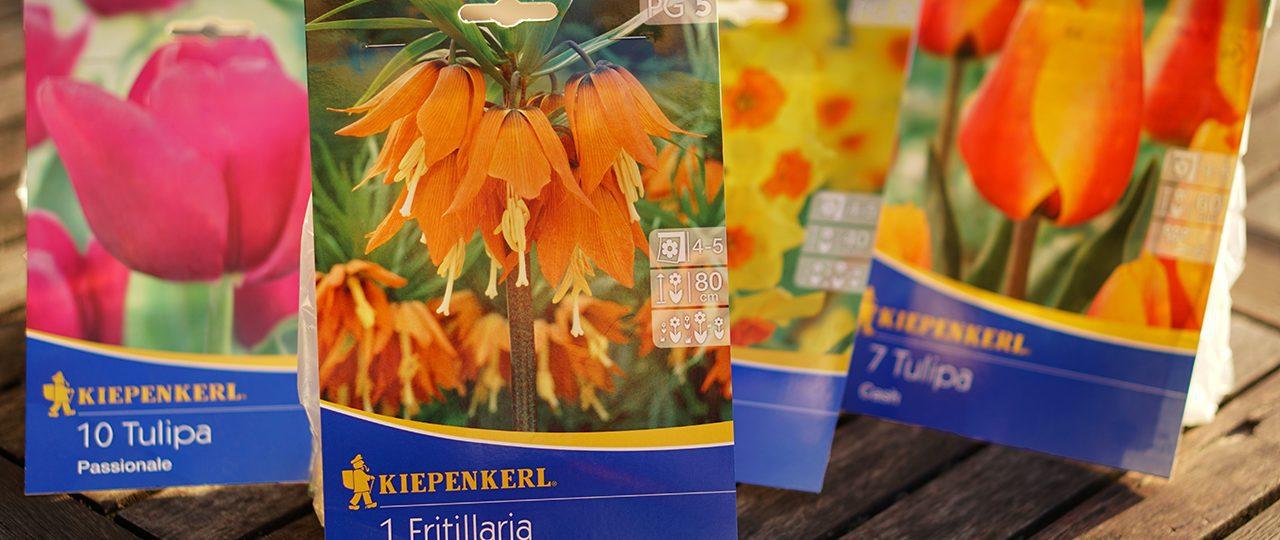 kert shop tavaszi hagyások akció