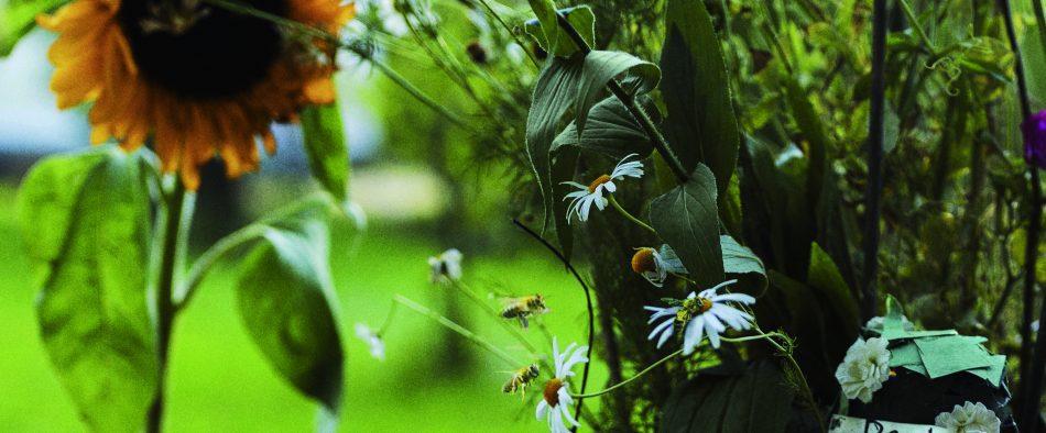 méhbarát kert méheknek