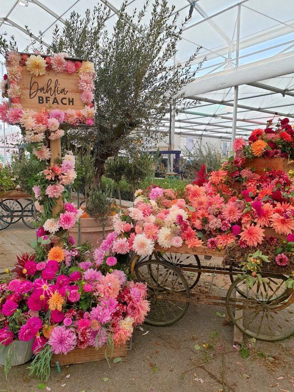 Chelsea Flower Show Nagy Pavilon 2021