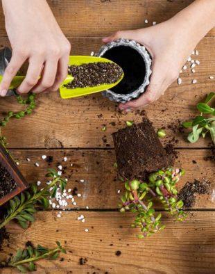 szobanövény tápozás